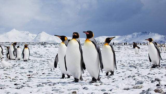 Inspired by Tux the Linux Open Source Penguin - Open Kanban